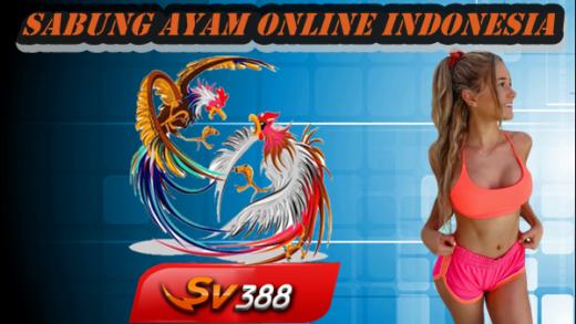 Langkah Menjadi Member Sabung Ayam Online Indonesia